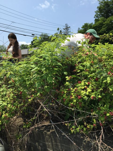 Berry Picking 1